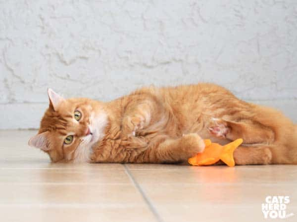 orange tabby cat beco freddie the fish catnip toy