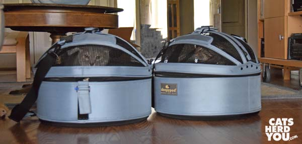gray tabby cat and brown tabby cat in sleepypod carriers