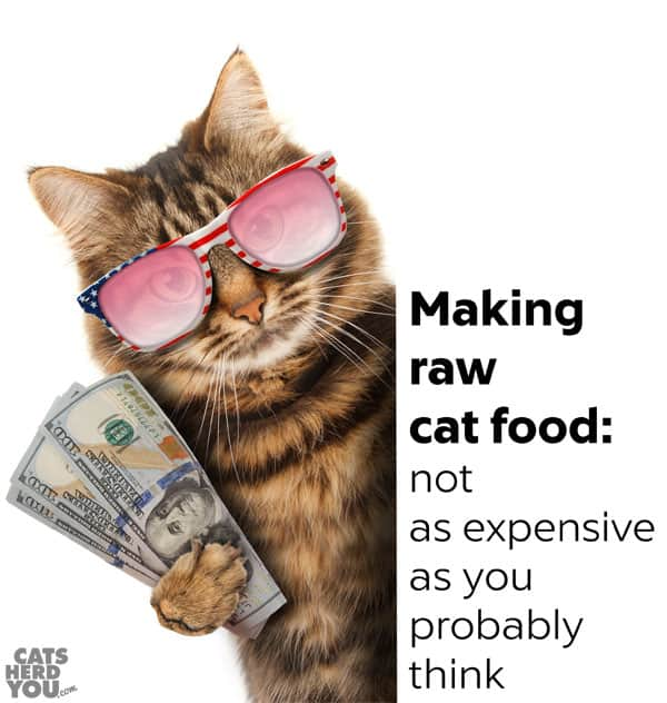 How To Feed My Cat Raw Food