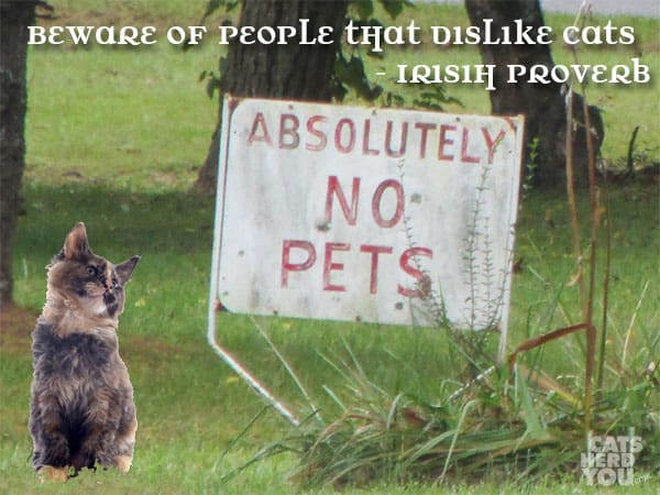 Beware of people that dislike cats