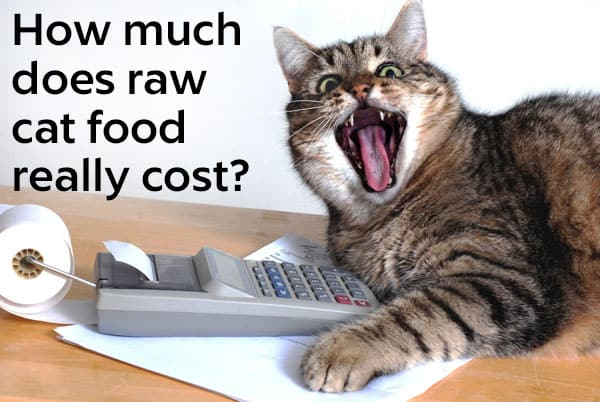 Is Raw Cat Food Expensive