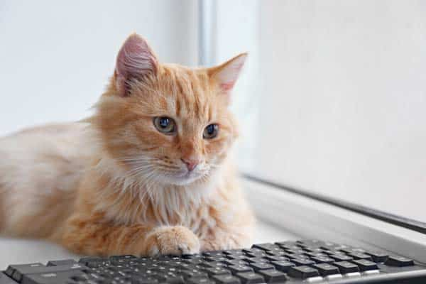 red tabby cat at computer keyboard, image credit: depositphotos/belchonock
