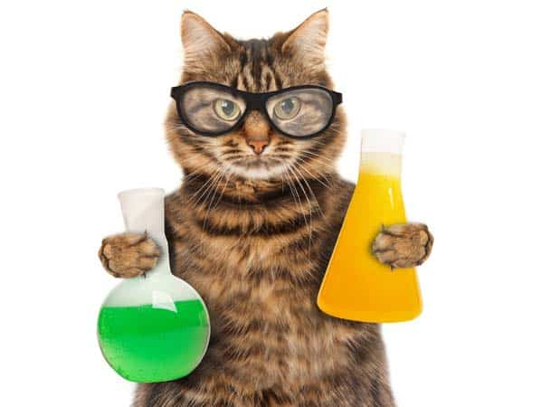 cat holding beakers, image credit: depositphotos/funny_cats