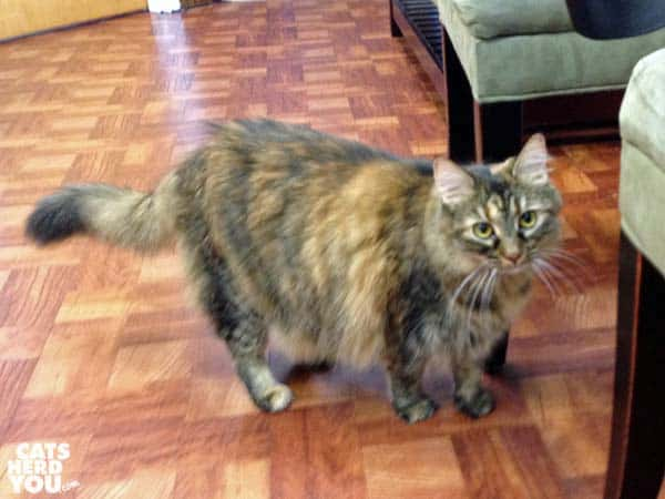 Josie, the vet office cat