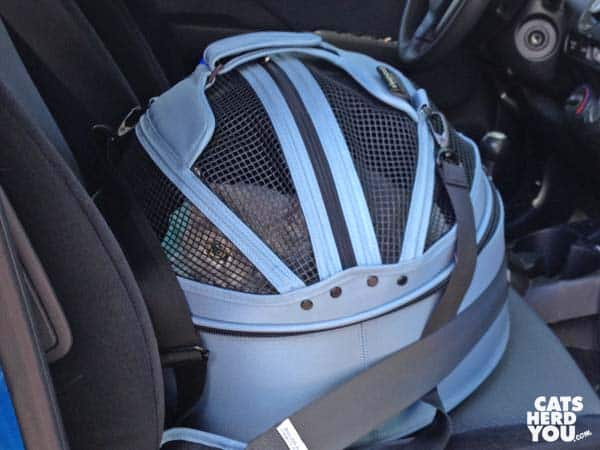 gray tabby cat in sleepypod, strapped into car