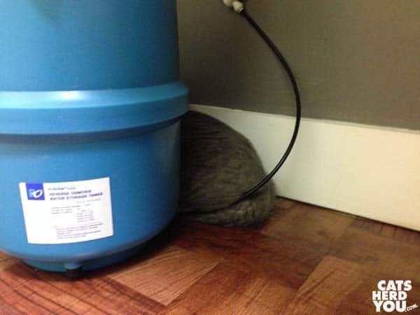 gray tabby cat hides at vet