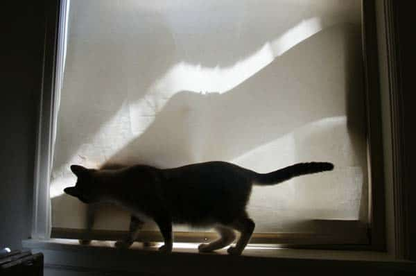 cats and window blind - creative commons image courtesy flickr/nauright