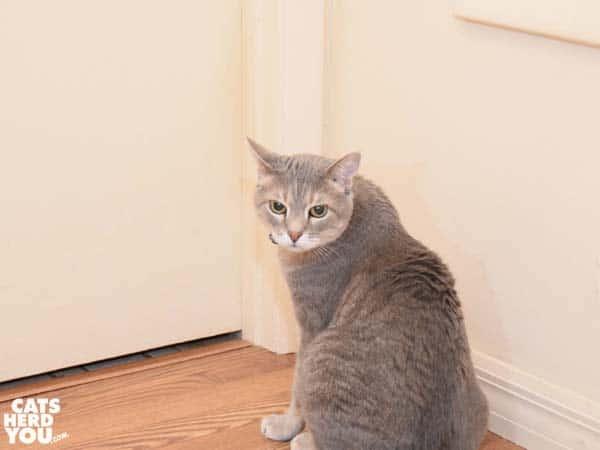 gray tabby cat in front of closed door