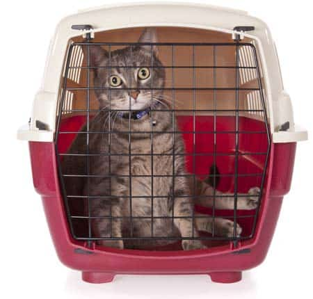 cat closed inside pet carrier. Image credit: depositphotos/Lusoimages