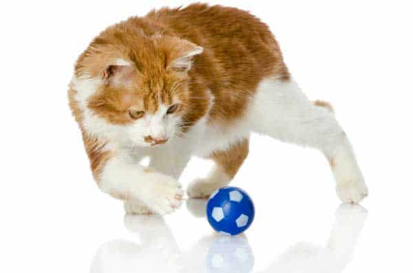 orange and white cat plays with toy. image credit: depositphotos/photo-deti