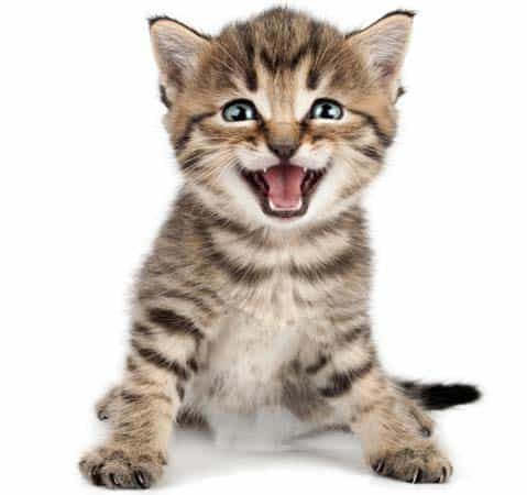 smiling, meowing kitten. Image credit: depositphotos/Cherry-Merry
