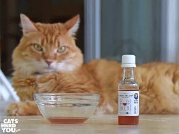 orange tabby cat looks skeptical at cat wine