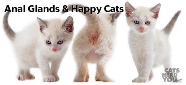 anal glands & happy cats