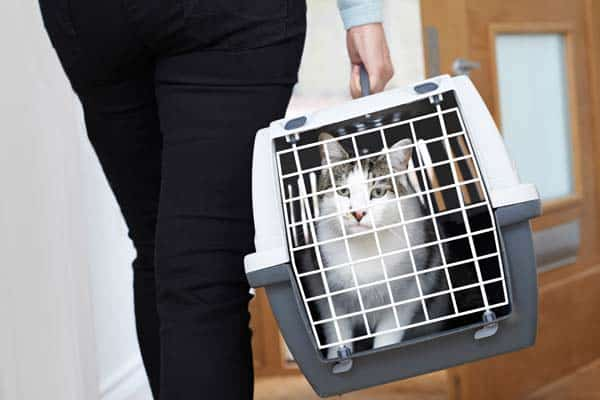 cat carrier being carried by woman. photo credit depositphotos/HighwayStarz