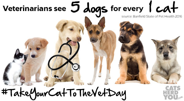 Cats see 5 Dogs for Every 1 Cat - #TakeYourCatToTheVetDay