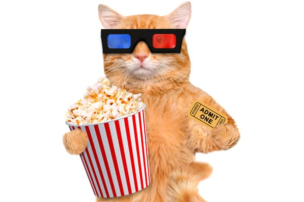 cat wearing 3D glasses. photo credit: depositphotos/RasulovS