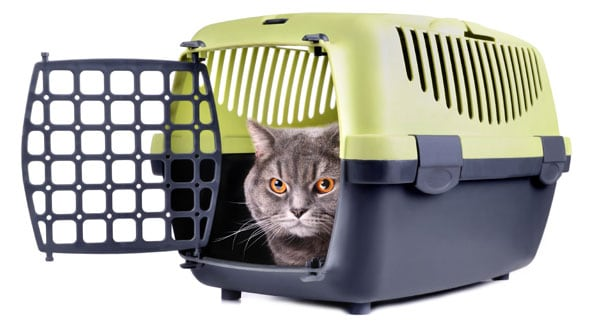 gray cat in green and gray carrier. photo credit: depositphotos/eAlisa