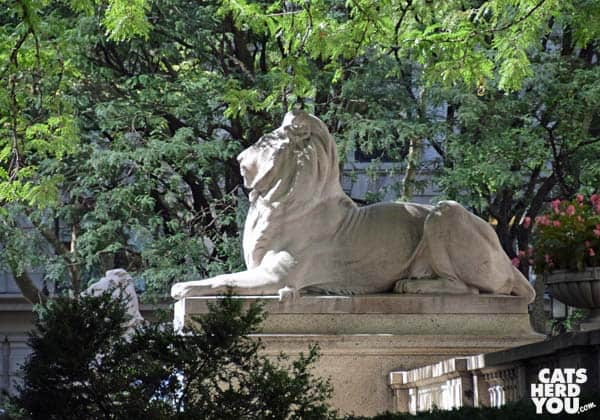 New York Public Library lion statue