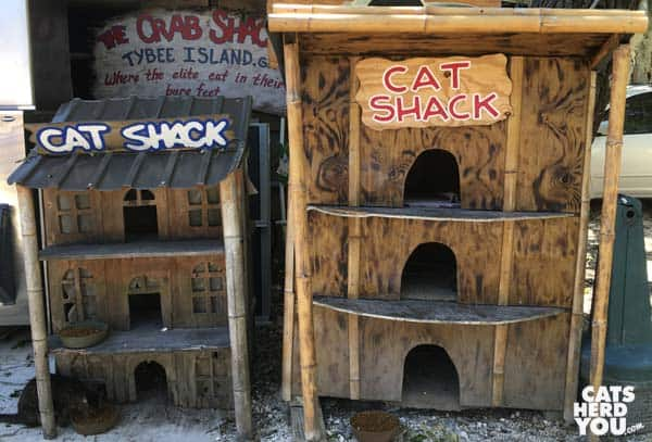 The Cat Shack at The Crab Shack