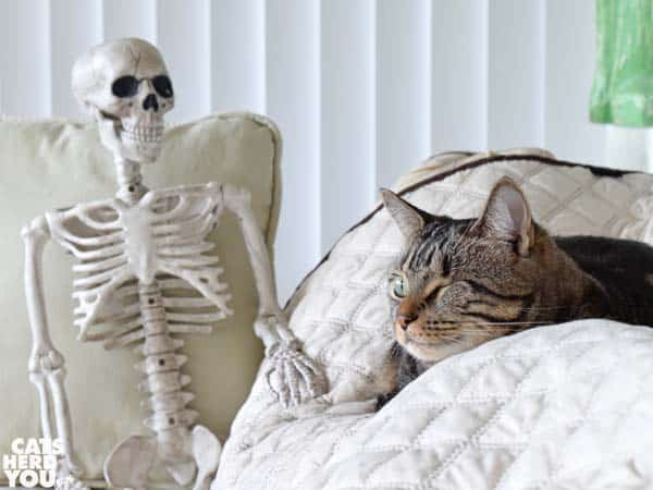 one-eyed tabby cat with skeleton