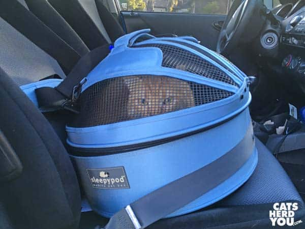 orange tabby cat in sleepypod, buckled into car