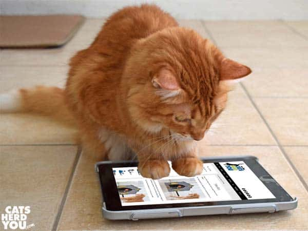 Newton looks at catsherdyou.com on tablet