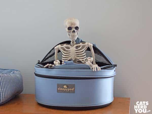 Skeleton in sleepypod