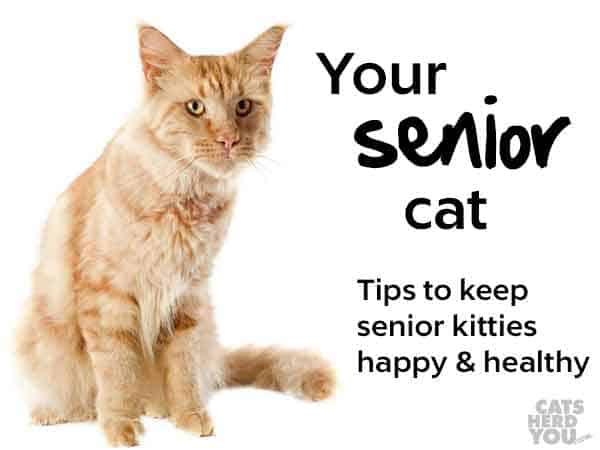 Your senior cat