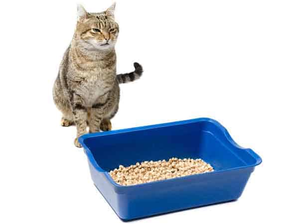 undersized litter box. Photo credit: Depositphotos/vertraut