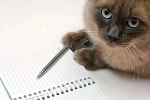 siamese cat with notepad. photo credit: depositphotos/dundanim