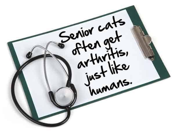 senior cats get arthritis, just like humans.