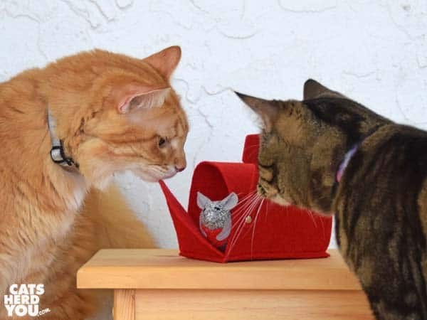 brown tabby cat and orange tabby cat look at valentine mouse in mailbox