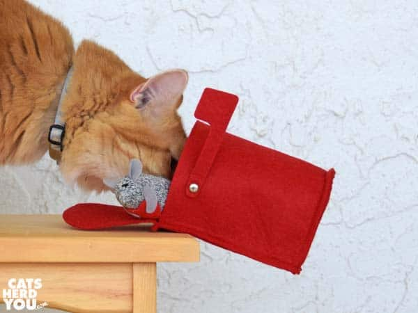 orange tabby cat pushes valentine mouse in mailbox over the edge