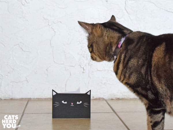 one-eyed brown tabby cat looks at black cat greeting card