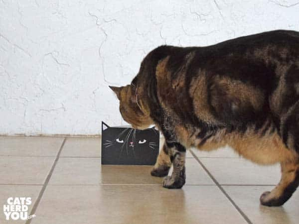 one-eyed brown tabby cat looks closely at black cat greeting card