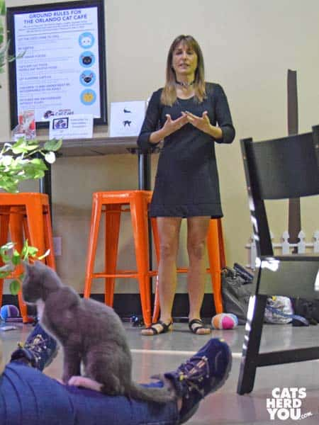 Jodi Ziskin at Orlando Cat Cafe
