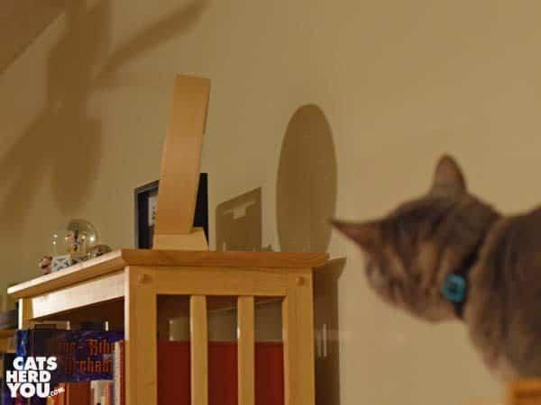gray tabby cat looks at clock
