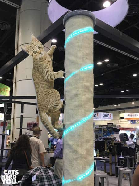 climbing cat display