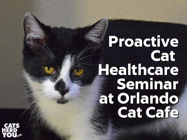 Proactive Cat Healthcare Seminar at Orlando Cat Cafe