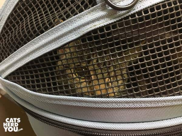 one-eyed brown tabby cat in sleeypod carrier