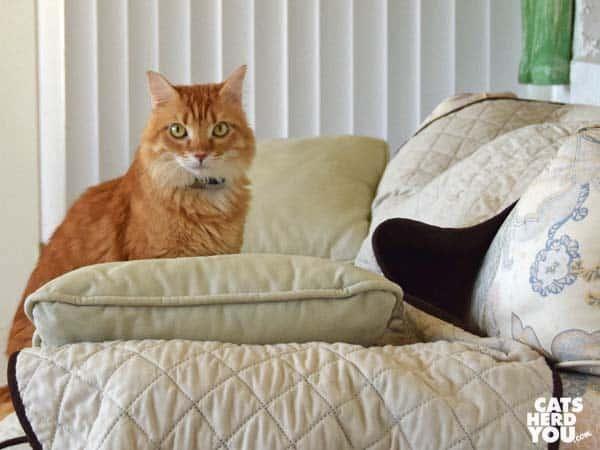 Orange mediumhair tabby cat on sofa