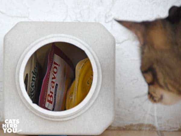 one-eyed brown tabby cat looks into Vittles Vault Jr. at treat bags