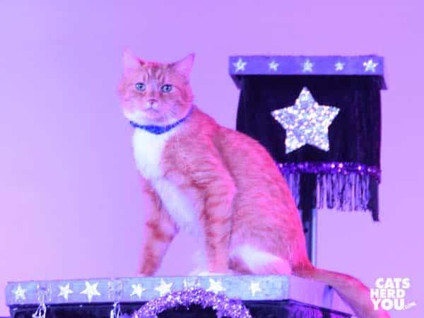 orange acro-cat