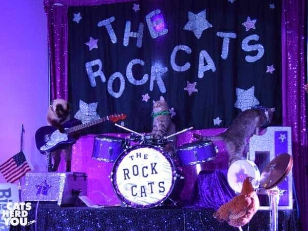 cats pretend to be a rock band