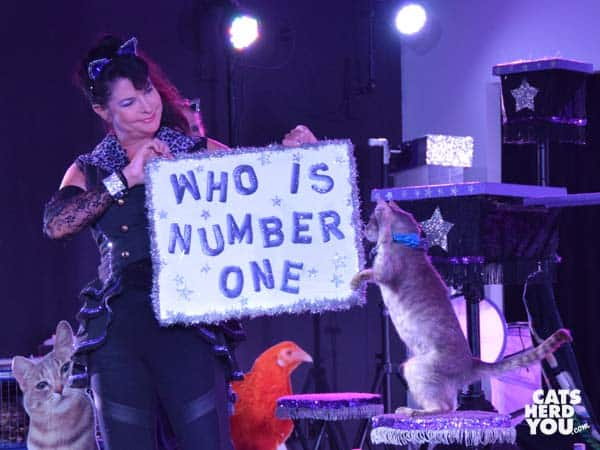 "Cat raises paw next to ""who is number one"" sign during Acro-Cats performance in Orlando"