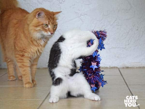 orange tabby cat watches tuxedo kitten wrestle with red, white, and blue wreath