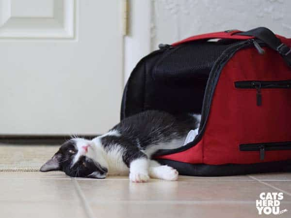 black and white tuxedo kitten lays halfway out of Sleepyod Air cat carrier