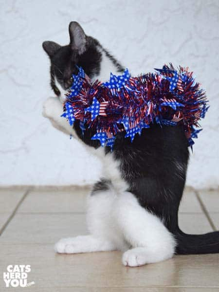 tuxedo kitten wrapped in red, white, and blue wreath