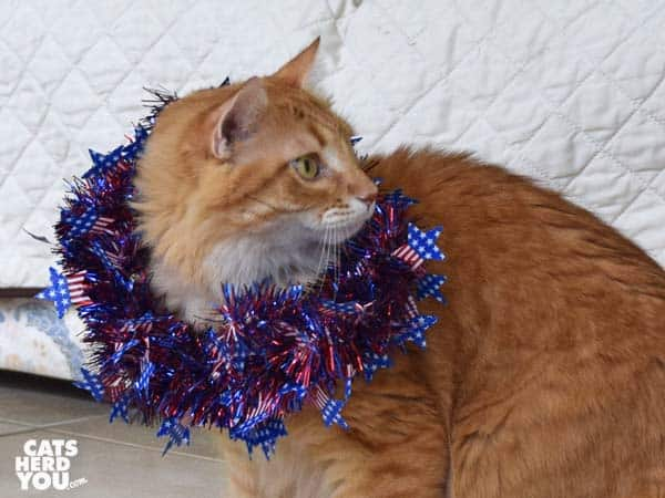 orange tabby cat wearing red, white, and blue wreath
