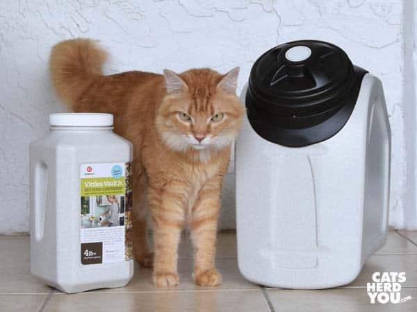 Orange tabby cat stands between Vittles Vault Home Collection 18 and Vittles Vault Jr.